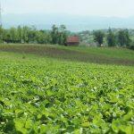 Uputstvo za dobijanje dozvole za kretanje za poljoprivrednike